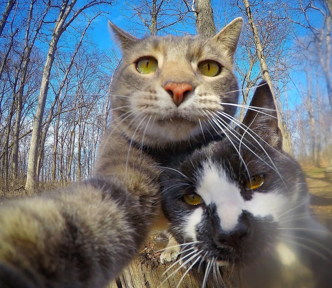 Кот делает селфи картинки приколы
