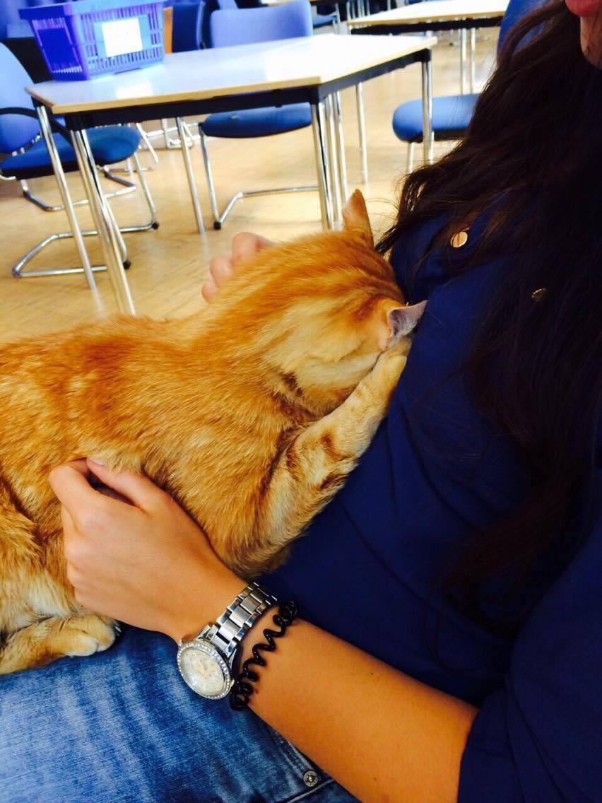Campus-Cat-1