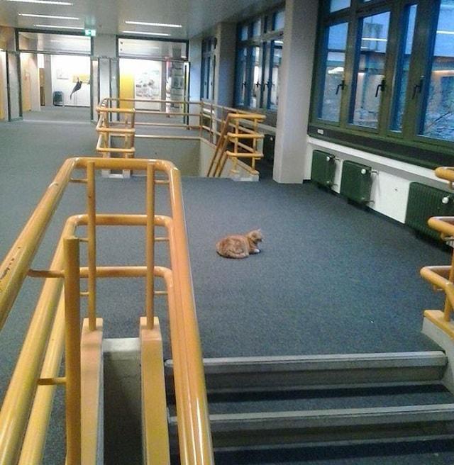 Campus-Cat-11