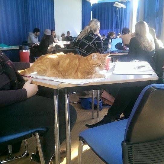 Campus-Cat-6