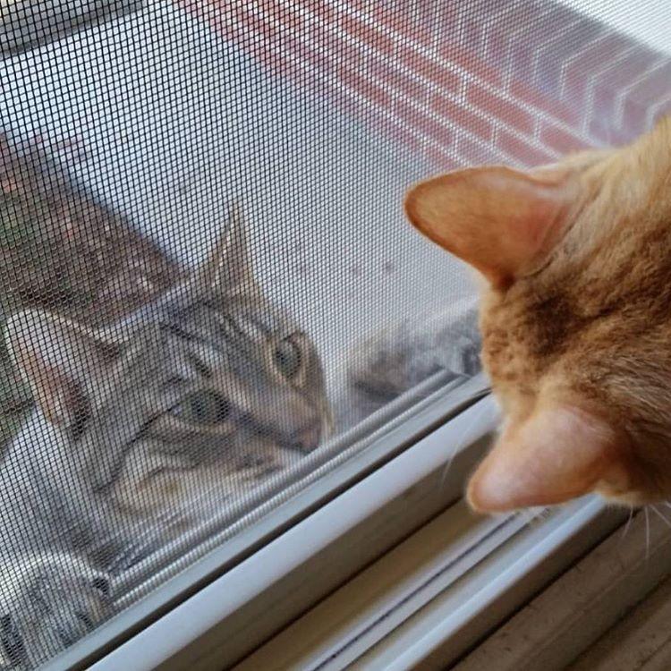 cat-neighbors-01