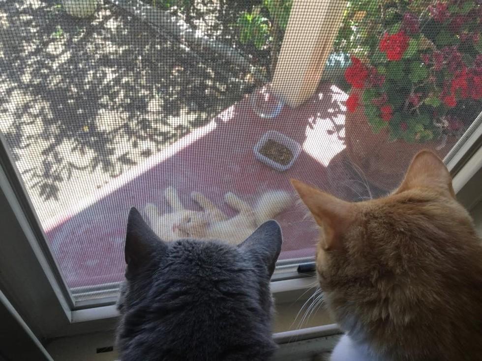 cat-neighbors-03
