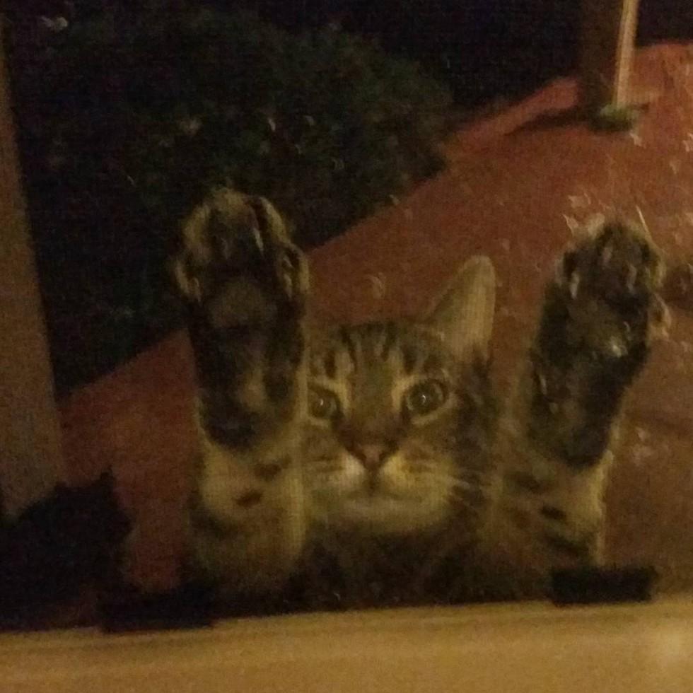 cat-neighbors-04