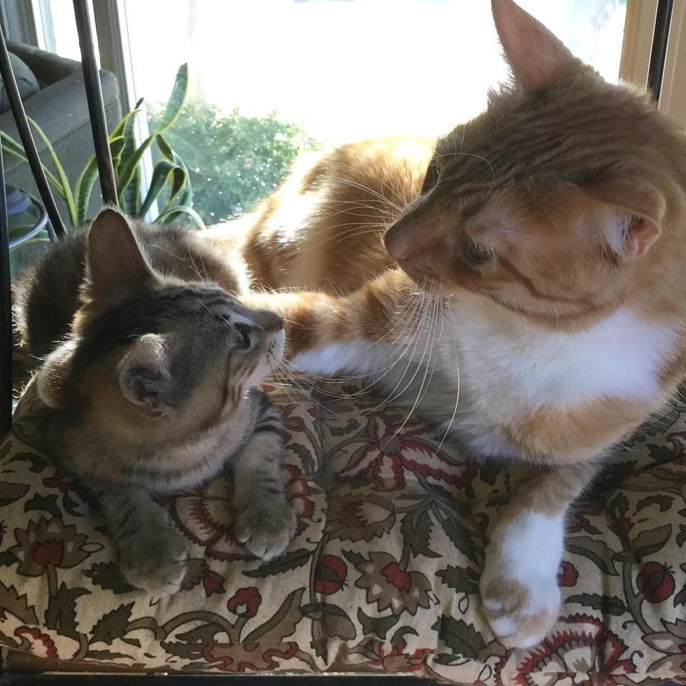 cat-neighbors-09