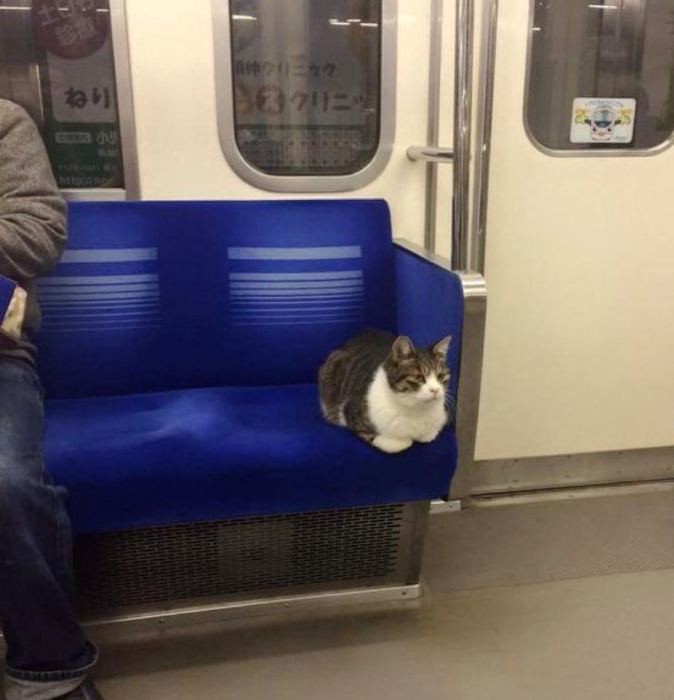 lonely-travel-cat-01