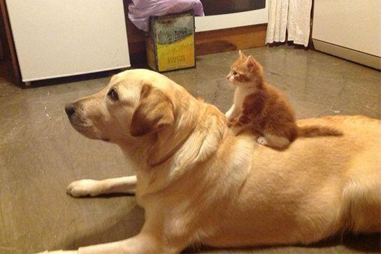 cat-dog-buds-01