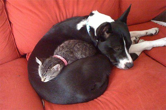 cat-dog-buds-06