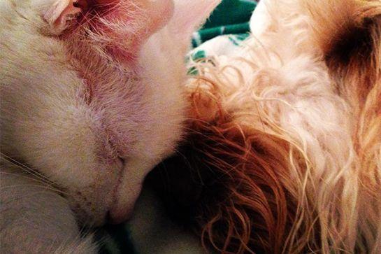 cat-dog-buds-09