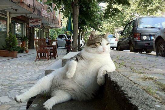 cats-life-advice-09