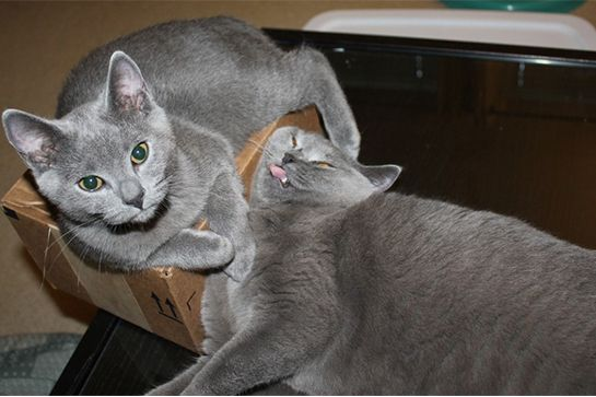 cats-life-advice-11