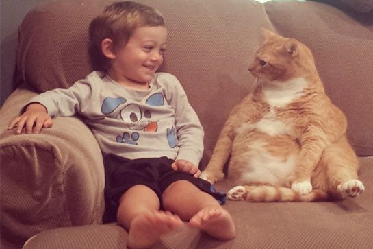 cats-life-advice-12