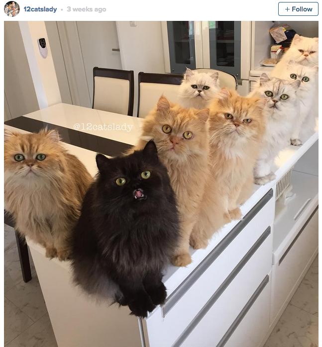 12-cats-lady-01
