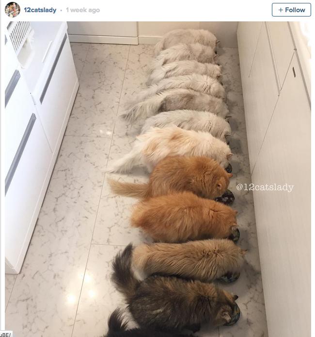 12-cats-lady-02
