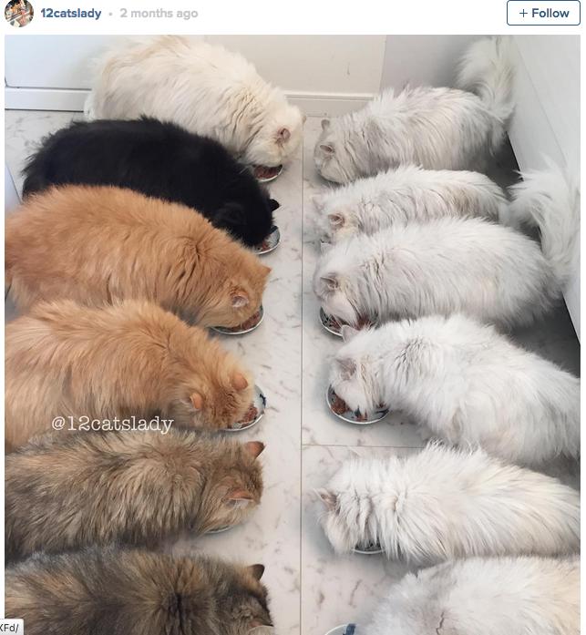 12-cats-lady-03