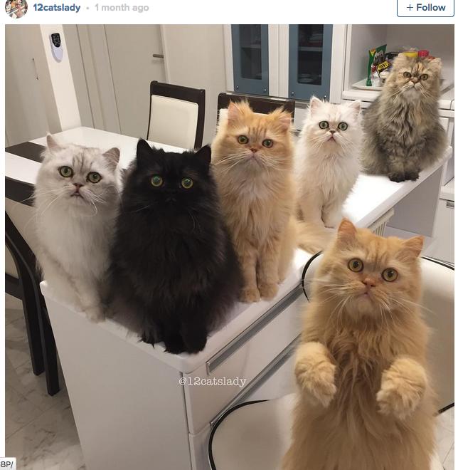 12-cats-lady-06