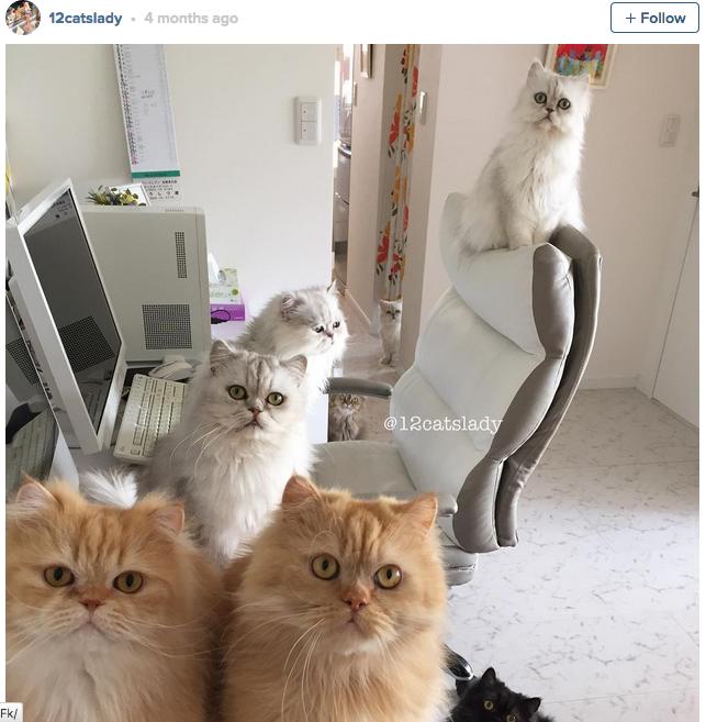 12-cats-lady-07