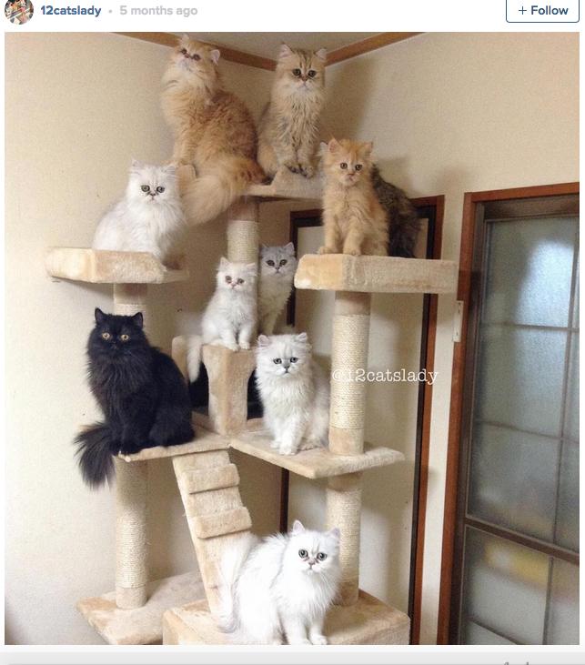 12-cats-lady-13