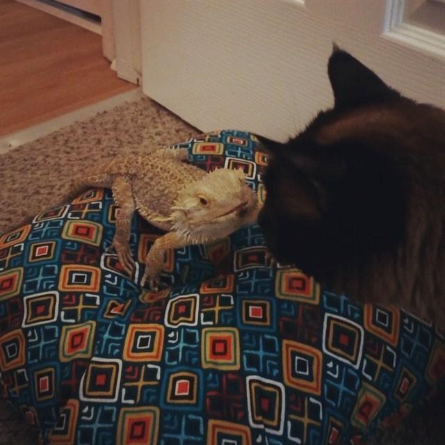 cat-lizard-bff-03