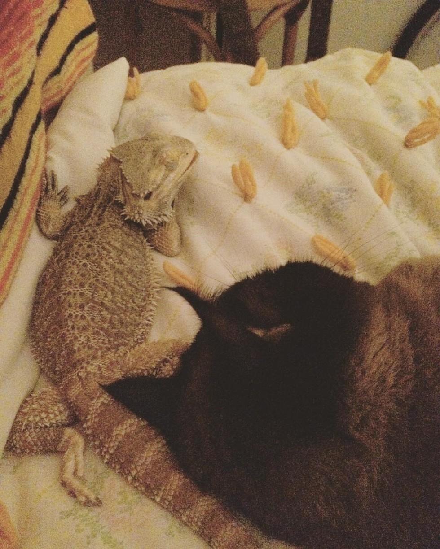 cat-lizard-bff-04