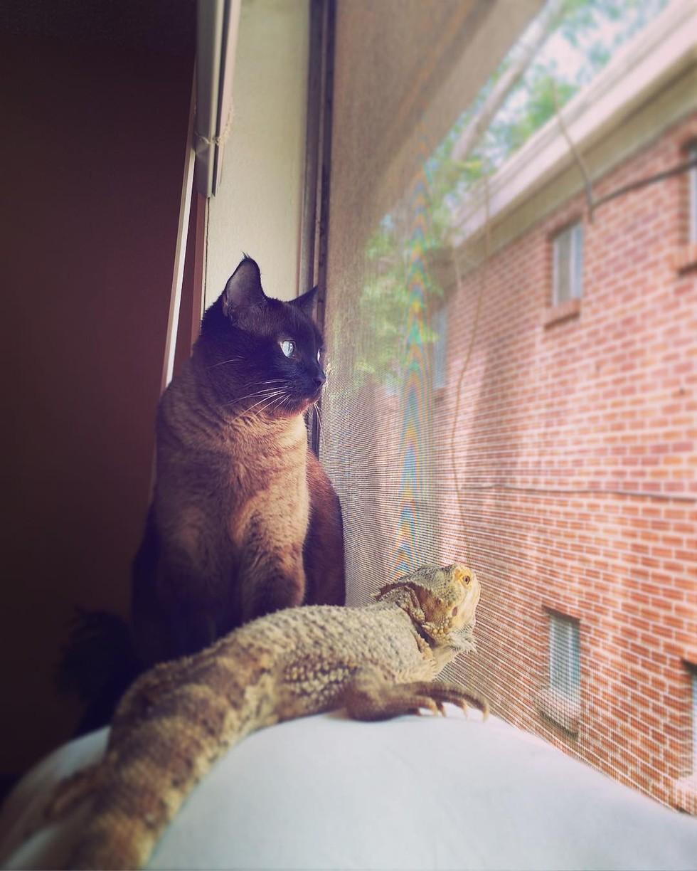 cat-lizard-bff-06