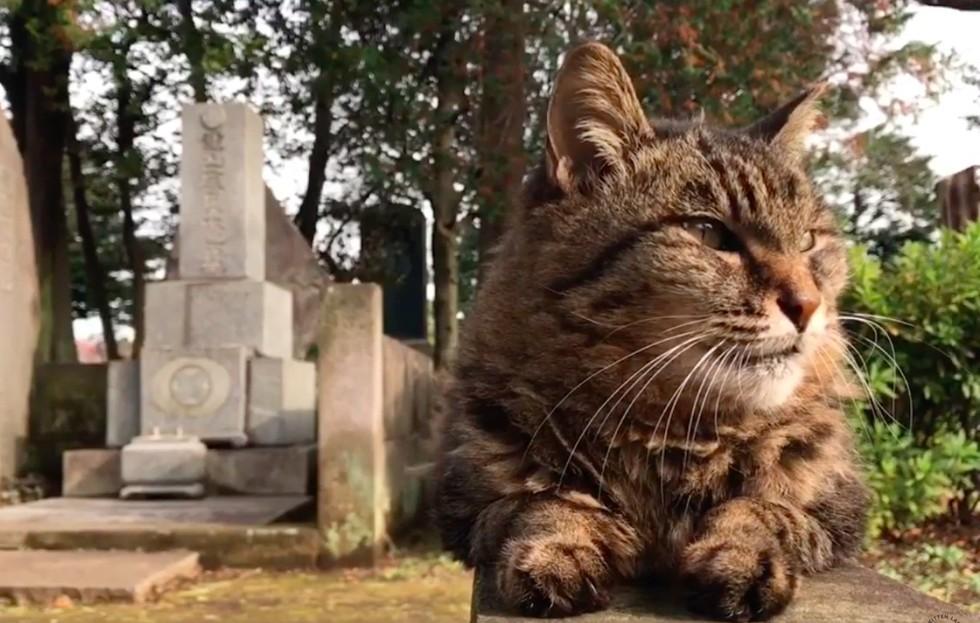 guard-cats-01