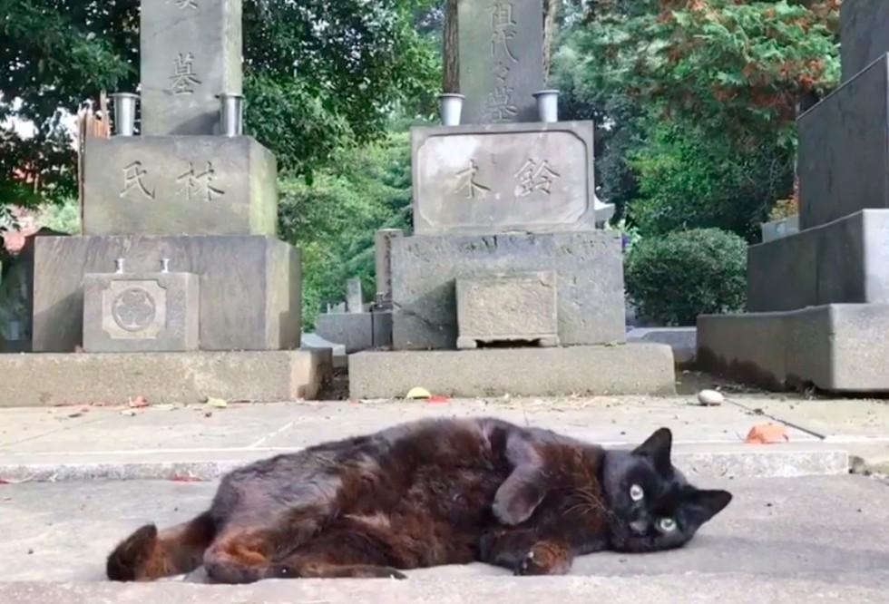 guard-cats-02