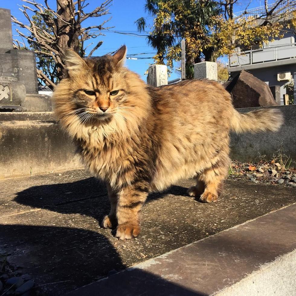 guard-cats-07