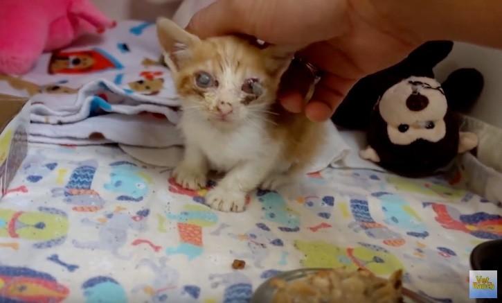 saddest-kitty-01
