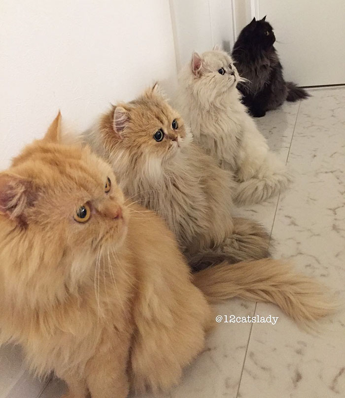 12-cats-lady-10