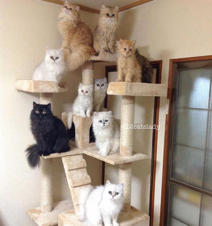 12-cats-lady-11