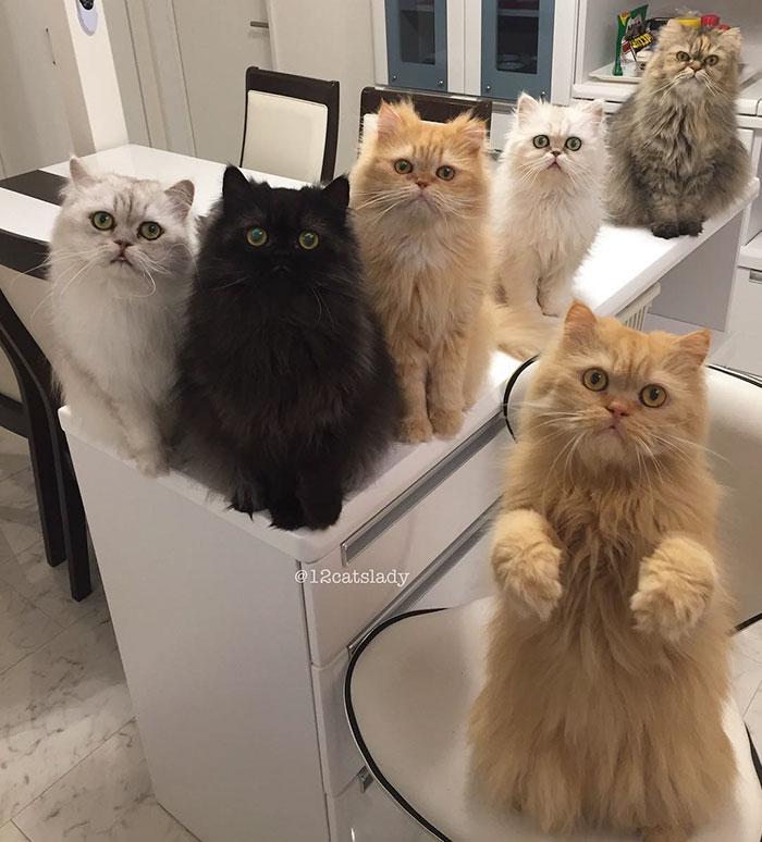 12-cats-lady-12