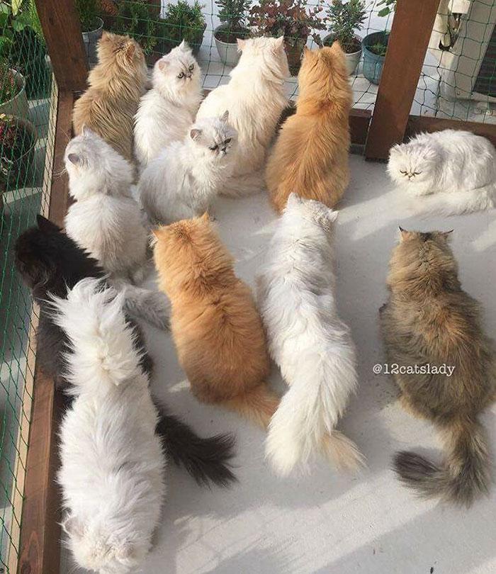 12-cats-lady-14