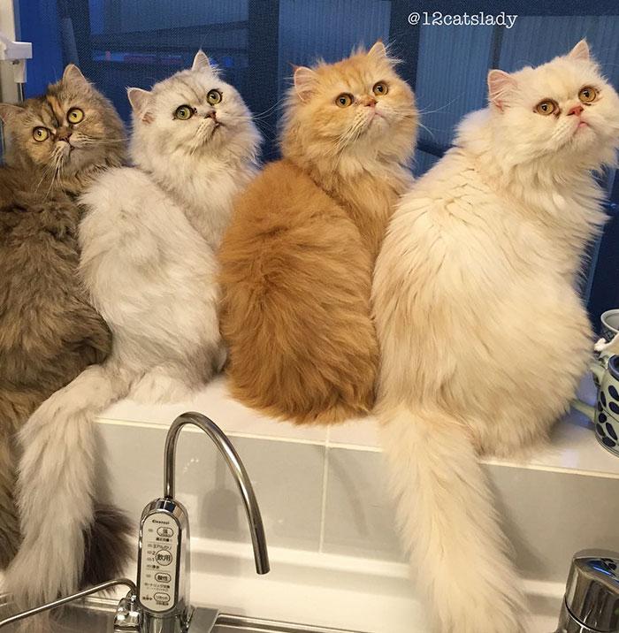 12-cats-lady-6