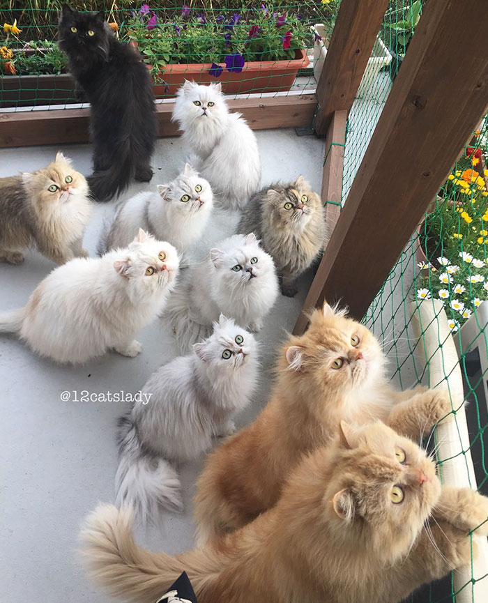 12-cats-lady-7