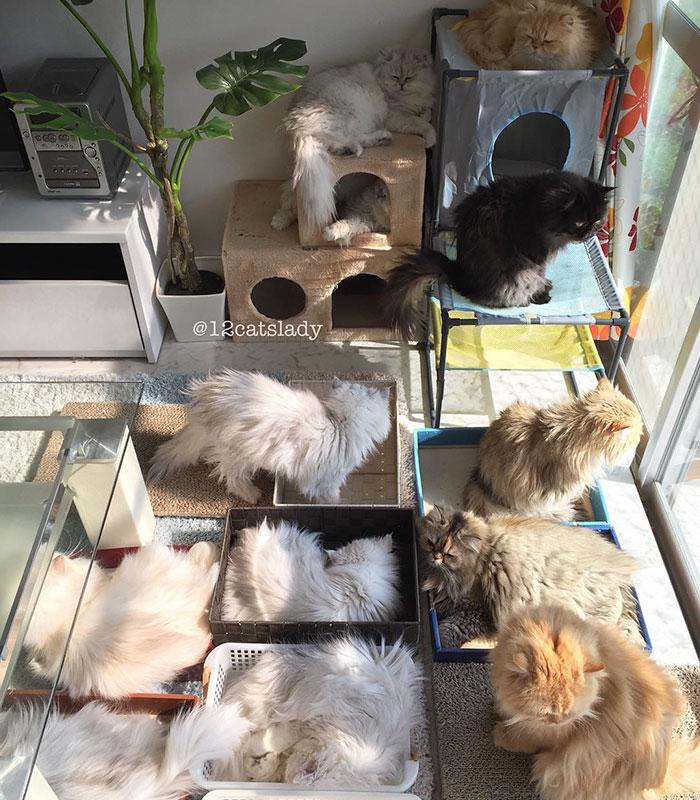 12-cats-lady-9