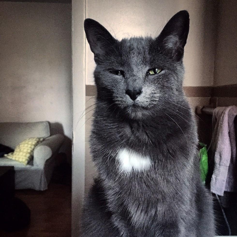 bathroom-cats-01