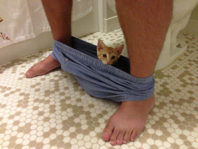 bathroom-cats-09