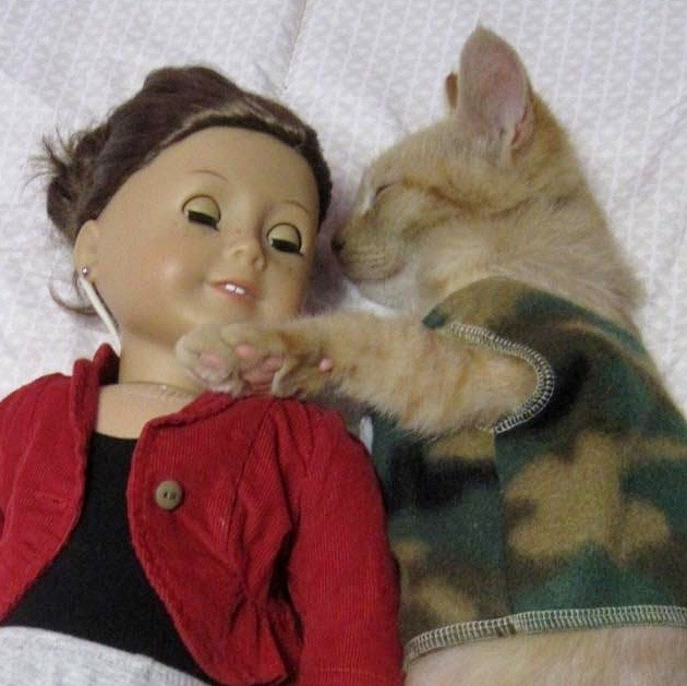 cat-doll-love-05