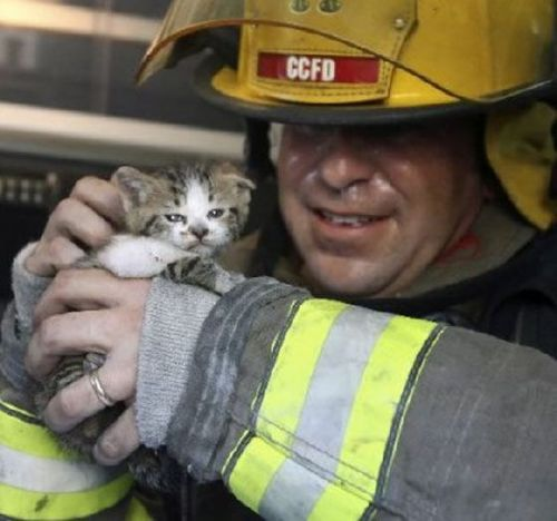 deserving-cats-15