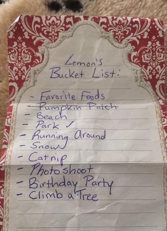 lemon-bucket-list-3