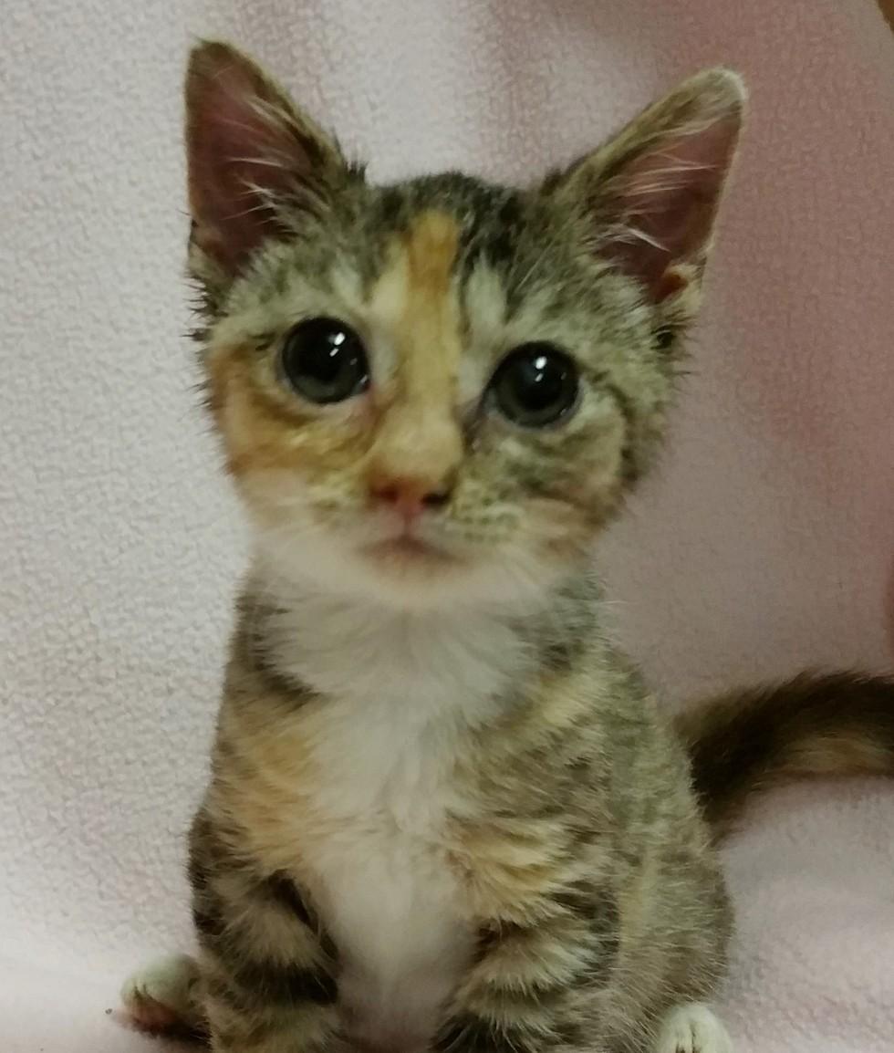 micro-cat-06