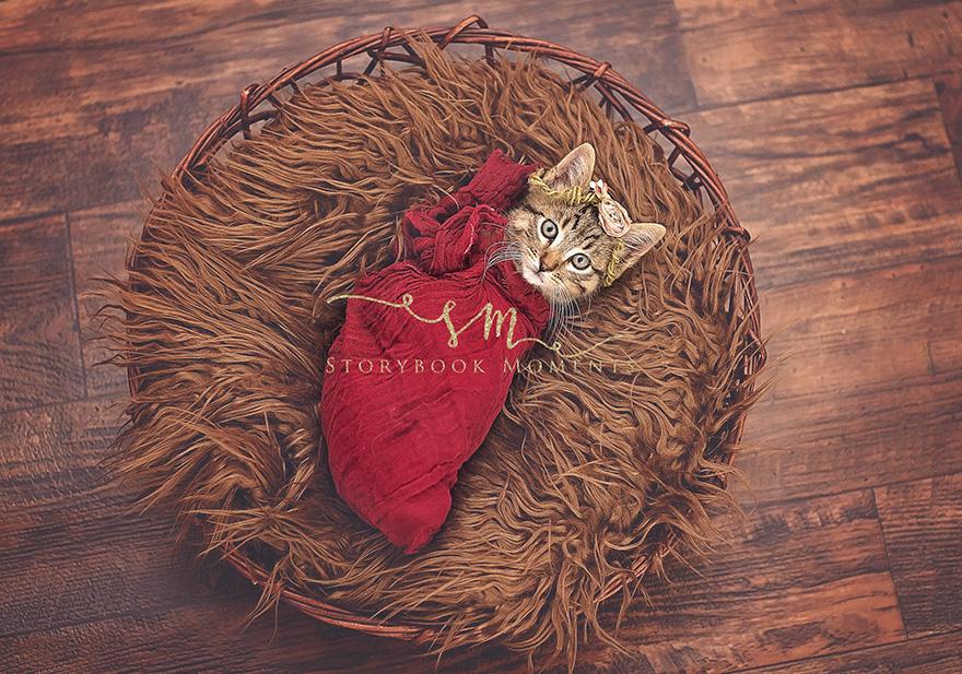 newborn-cat-photoshoot-1