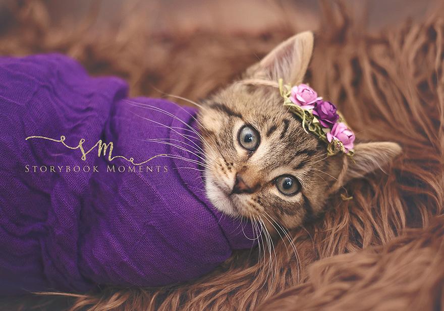 newborn-cat-photoshoot-2
