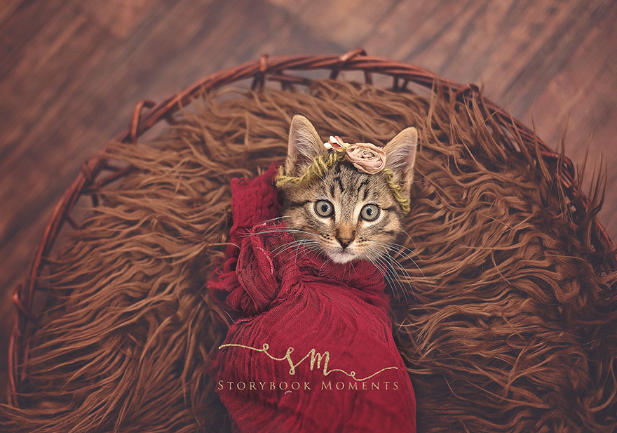 newborn-cat-photoshoot-3
