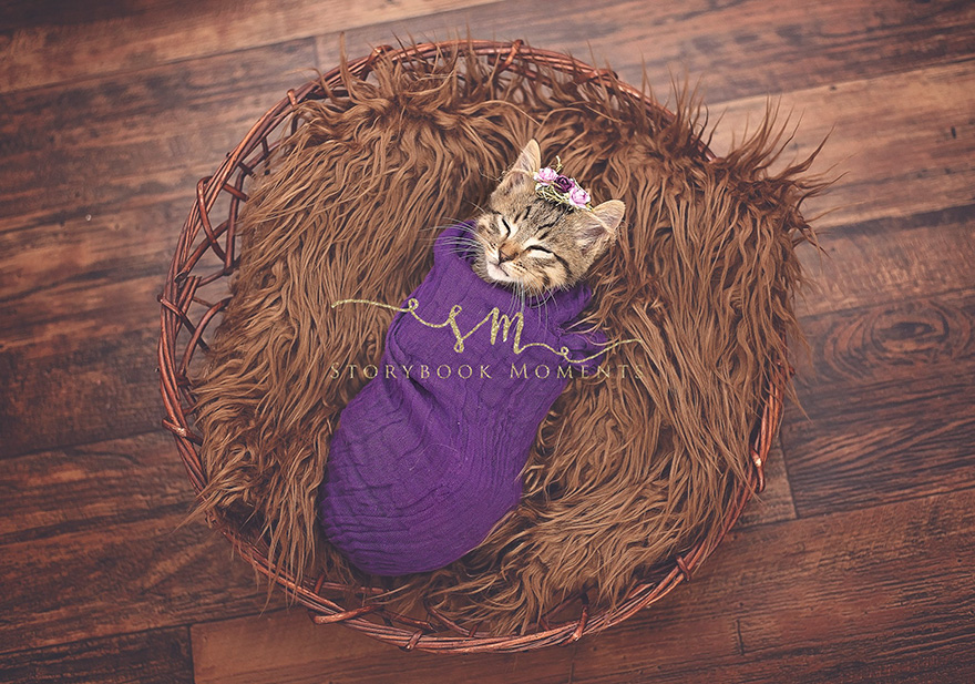 newborn-cat-photoshoot-4