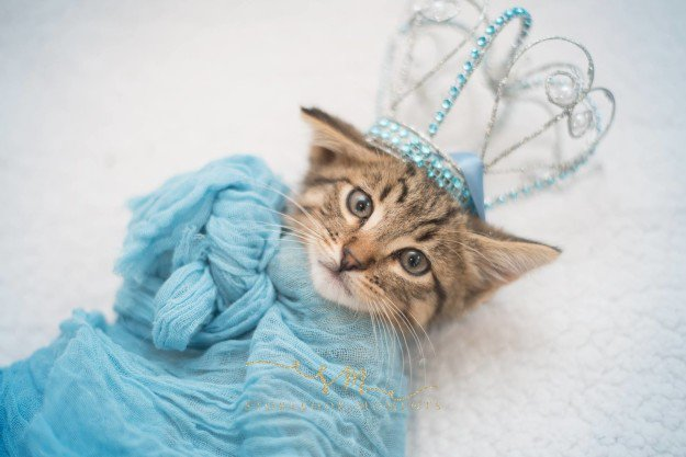 newborn-cat-photoshoot-5