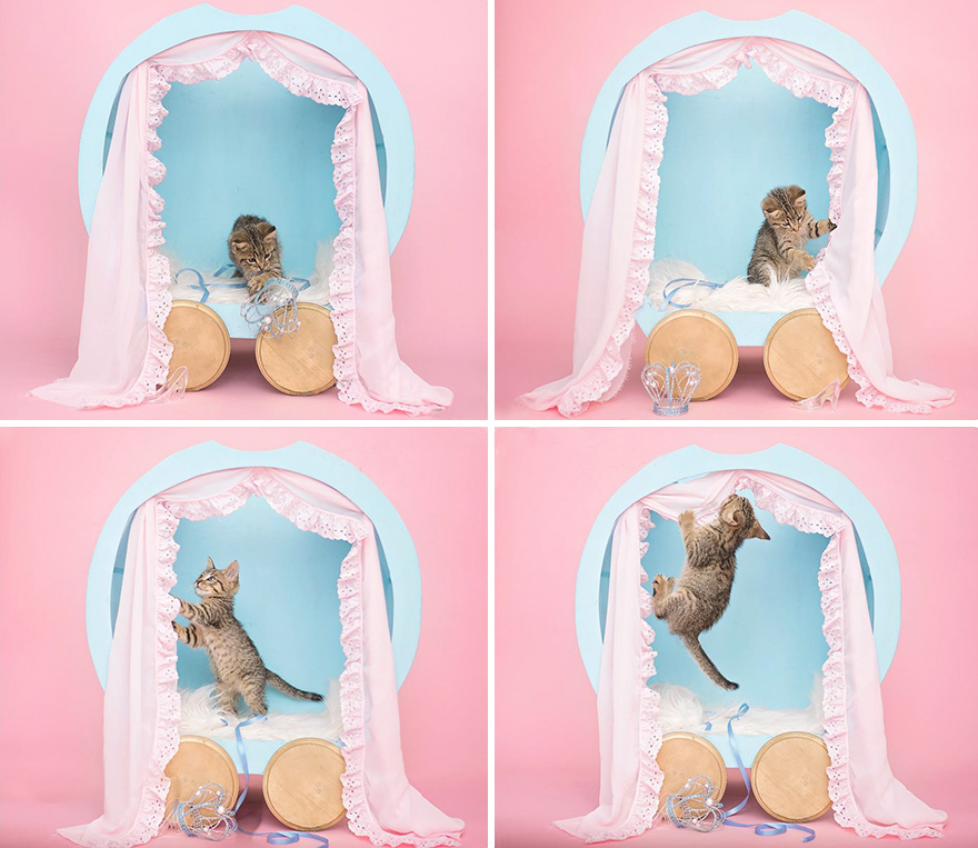 newborn-cat-photoshoot-6