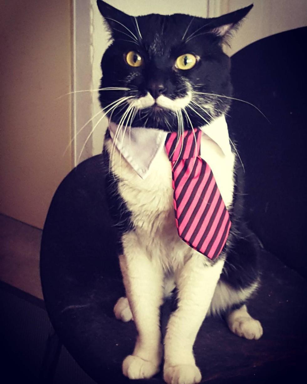 perfect-stache-cat-05