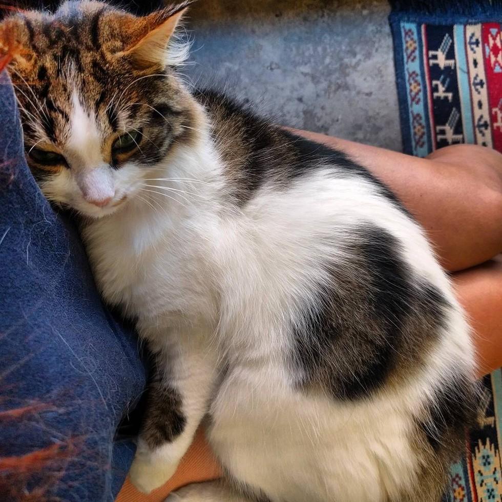 shelter-cat-10