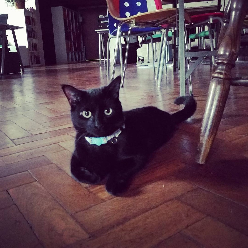 shelter-cat-employee-09